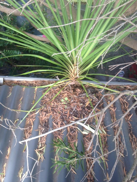 Small Forest Found Growing Out Of Gutter Geelong